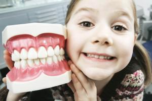 Морфологическая и функциональная характеристика молочного или сменного прикуса у детей его отличия от постоянного