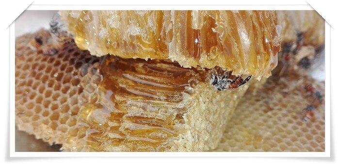 Мёд и прополис: лечение гастрита