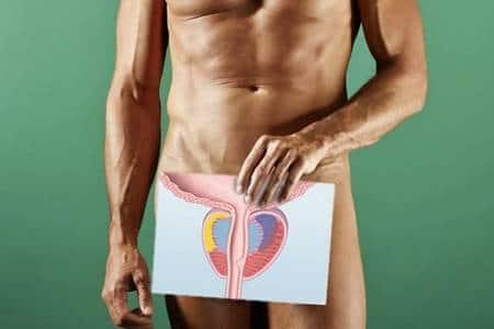 мужчина держит схему предстательной железы