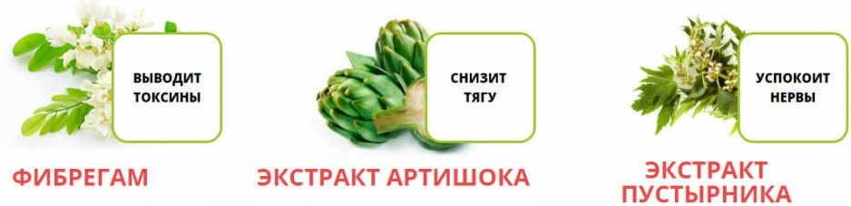 ветви пустырника фибергама и плоды артишока