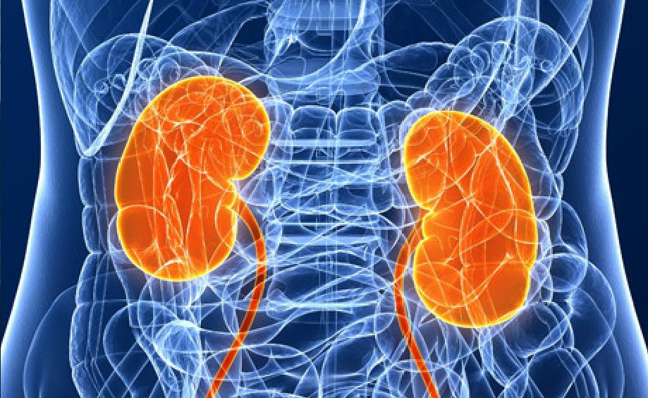 Метаболиты выводятся при помощи почек