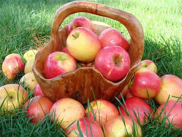 Молодильные яблочки
