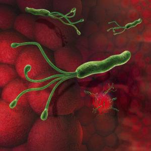 Бактерия передаётся от человека к человеку вне зависимости от родственных связей