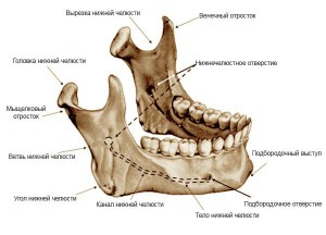 Симптомы и лечение вывиха или подвывиха нижней челюсти: можно ли ее вправить самостоятельно?