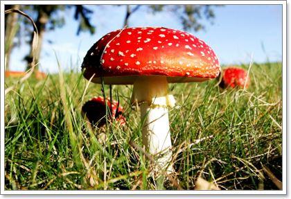 Отравление ядовитыми грибами. Симптомы и первая помощь