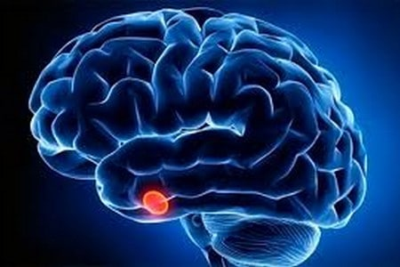 Человеческие мозги