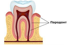 Строение и функции тканей пародонта (его анатомия и физиология), виды заболеваний