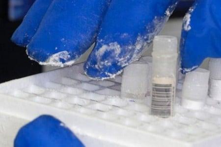 Пробирки с замороженной спермой