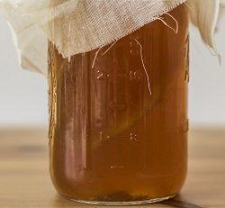 Чайный гриб полезные свойства и приготовление напитка