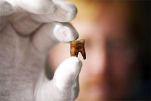 Понятие, функции и строение цемента специфической костной ткани человеческого зуба