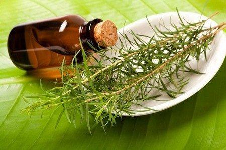 Баночка с маслом чайного дерева