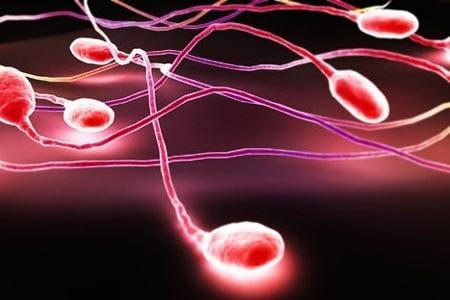 Красные спермотозоиды