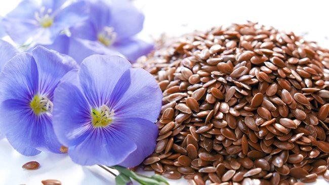 Семена льна: как принимать для очищения организма