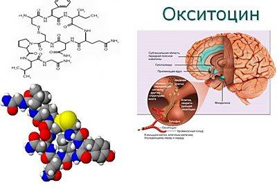 Все о гормоне окситоцин: научный подход