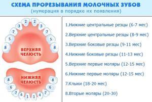 Почему у ребенка в год нет зубов: основные причины позднего прорезывания по мнению Комаровского