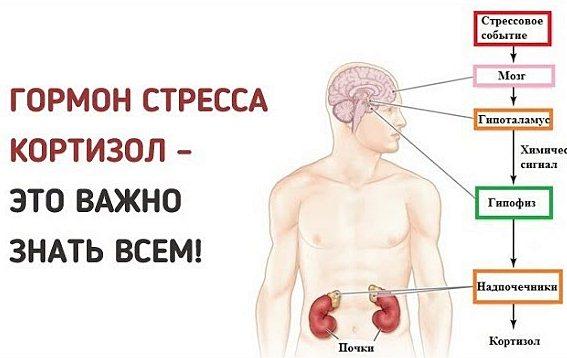 Признаки повышенного кортизола и возможные последствия