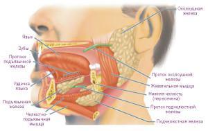 Воспаление слюной железы