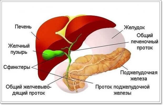 Воспалительные заболевания желчных путей