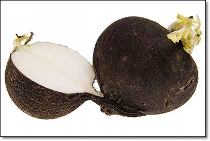 Полезные свойства черной редьки, рецепты