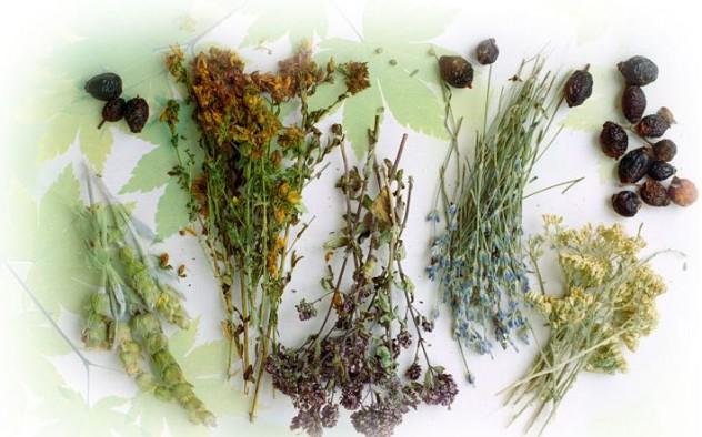 Описание свойств целебных трав